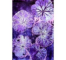 November's Garden 3 - Monoprint Photographic Print