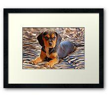Gracie - A Beagle Cross King Charles Spaniel Framed Print