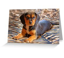Gracie - A Beagle Cross King Charles Spaniel Greeting Card