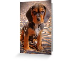 Gracie II - A Beagle cross King Charles Spaniel Greeting Card