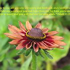 Matthew 11:28-30 by hummingbirds