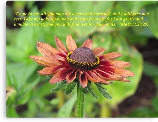 Matthew 11:28-30 by hummingbirds