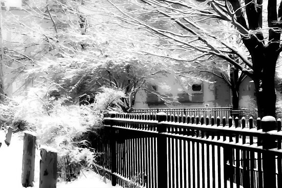 Dreamy Winter ©  by Dawn M. Becker