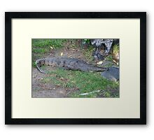 Fresh water crocodile Framed Print