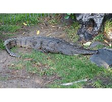 Fresh water crocodile Photographic Print