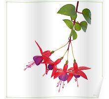 Nature Pendulum Poster