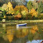 Cornwall: Autumn Colours on the River Lerryn by Rob Parsons