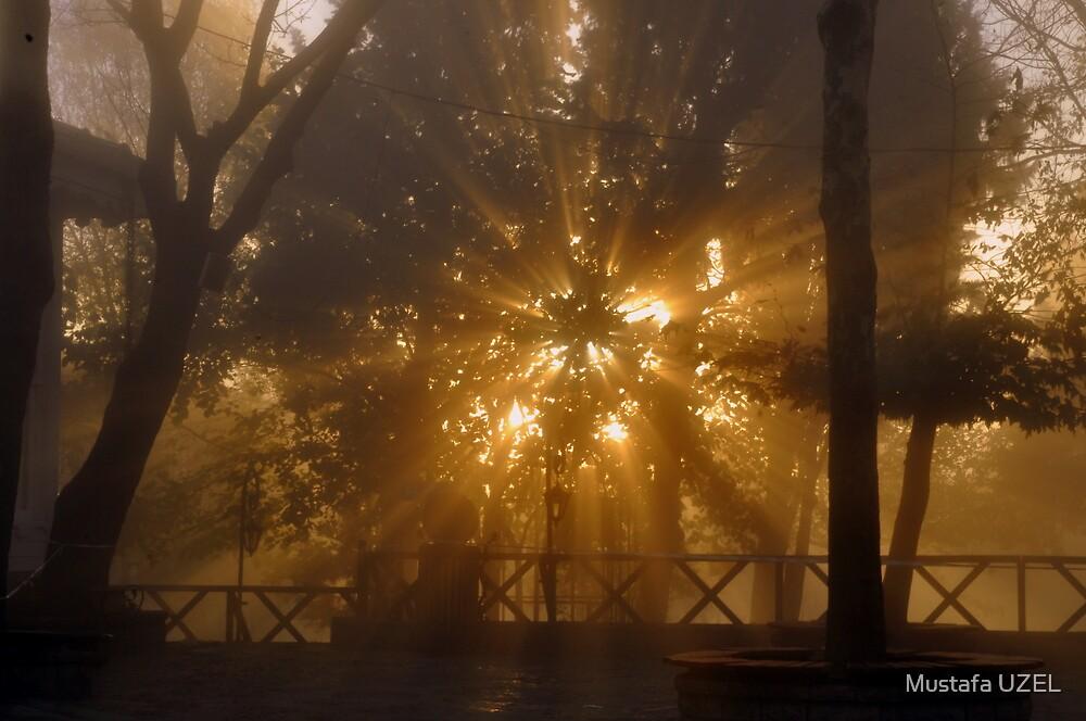 sun and fog by Mustafa UZEL