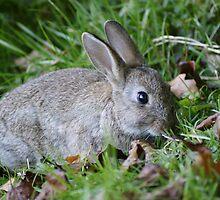 A Wild Baby Rabbit by MendipBlue