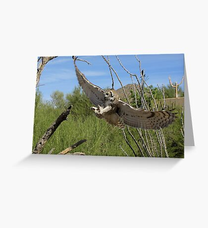 Great Horned Owl ~ 6 months old Greeting Card