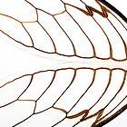 Cicada Wings by Steve Lovegrove