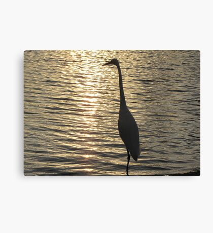 Great White Egret ~ Silhouette  Canvas Print