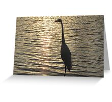 Great White Egret ~ Silhouette  Greeting Card