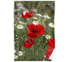 Wild Poppies and Daisies Poster