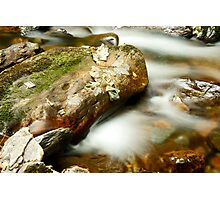 Leaf & Rock at Torc Photographic Print