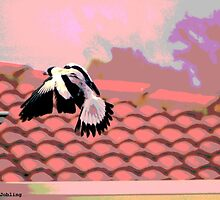 Backyard Magpie #7 of 8 by JoBling