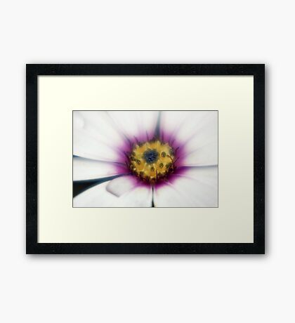 Daisy Dew Drop Framed Print