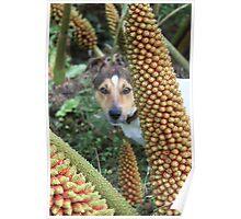 Dog in fern Poster