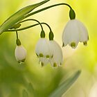 White Bells on Green by ArianaMurphy