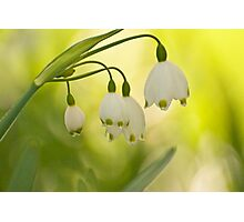 White Bells on Green Photographic Print