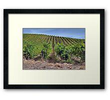 Adelaide Hills Vineyard, South Australia   Framed Print