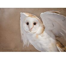 Barn Owl with Textures Photographic Print