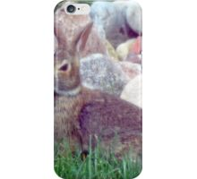 Front Yard Bunny iPhone Case/Skin