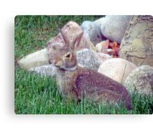 Front Yard Bunny Canvas Print