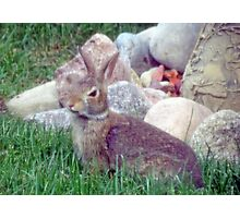 Front Yard Bunny Photographic Print
