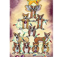 Corgi dogs make up a fur tree for Christmas Photographic Print