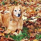 Hunter in Fall Colors #2 by Jennifer Hulbert-Hortman