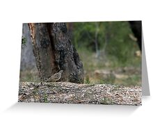 Spotted Quail Thrush Greeting Card