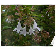 Floral Bells Poster