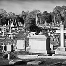 Hollywood Cemetery by Harry H Hicklin