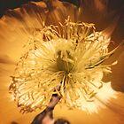 Yellow Flower Sunny Daze by chunkymonkey
