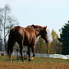 Trot by RockyWalley