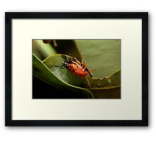 Coming Out Party Framed Print