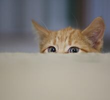 Playful kitten by ryan peck