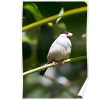 Sparrow on a tree branch Poster