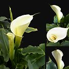 Calla lilies collage by Madalena Lobao-Tello