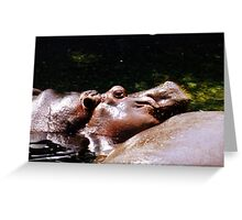 Harry the Hippo Greeting Card
