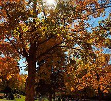 A Burst of Autumn by kelleygirl
