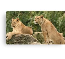 Sisters! Canvas Print