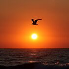 Seagull at sunrise - Carolina Beach by jabo7