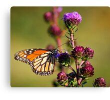 Flutter Bye,,,I Need More Flutter Byes Canvas Print