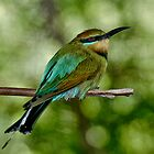 Rainbow Bee-Eater by Tom Newman