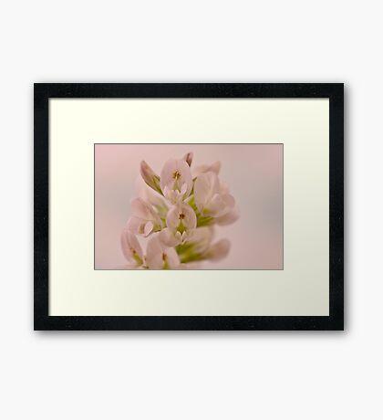 Milkvetch Wild Flower Macro Framed Print
