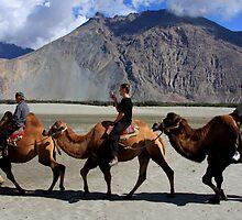 Camel Ride in Sumur Desert (Ladakh, India) by Amit Kumar