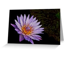 Purple waterlily Greeting Card