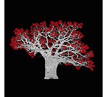 Red Heart Tree Photographic Print